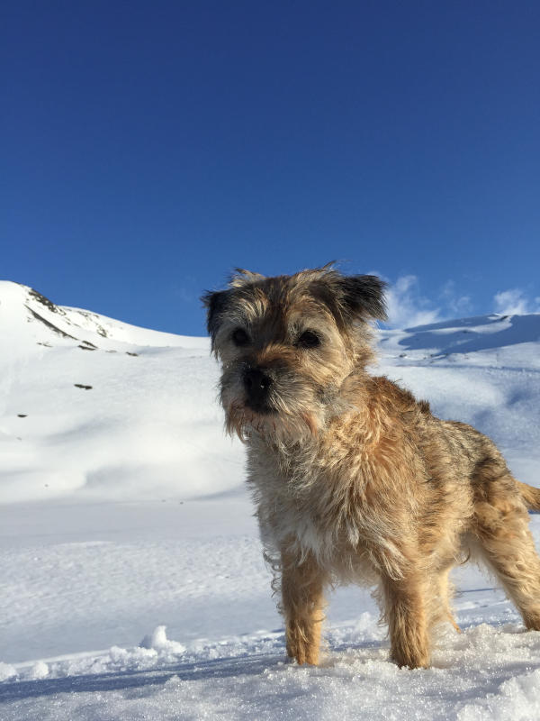 hund i snön