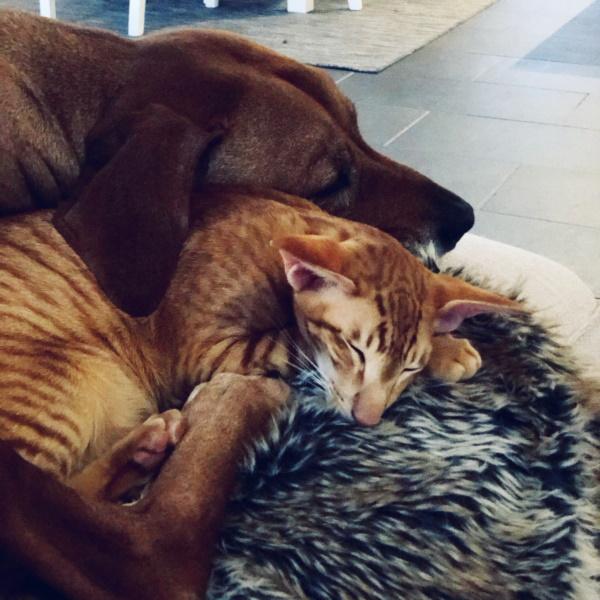 Veterinär karlstad - hund och katt